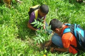 El Departamento de Ambiente contempla la siembra de 800 plantones.