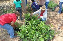 Administrativos y Estudiantes participan en la preparación del vivero.