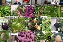 Cultivos Organoponicos como Sistema de Producción Urbana.