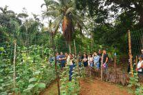 Ing. Mario Morales enseñando los avances en los cultivos de pepino y frijol