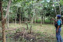 Ing. Abelardo Franco en el área reforestada.