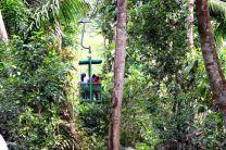 Bosque Tropical.