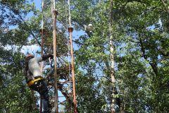 Estudio del flujo de carbono y agua en los manglares