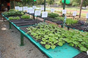 El vivero contaba con hortalizas de diferentes verduras que se pensaba sólo podían producirse en Tierras Altas, Chiriquí.